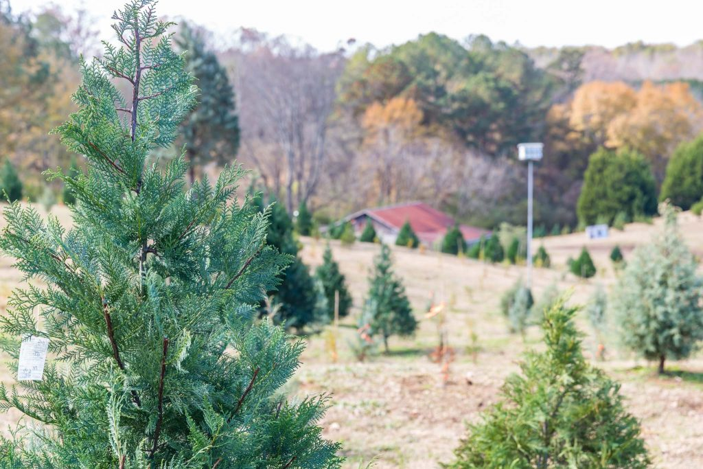 Inspired Southerner Pine Hill Farms