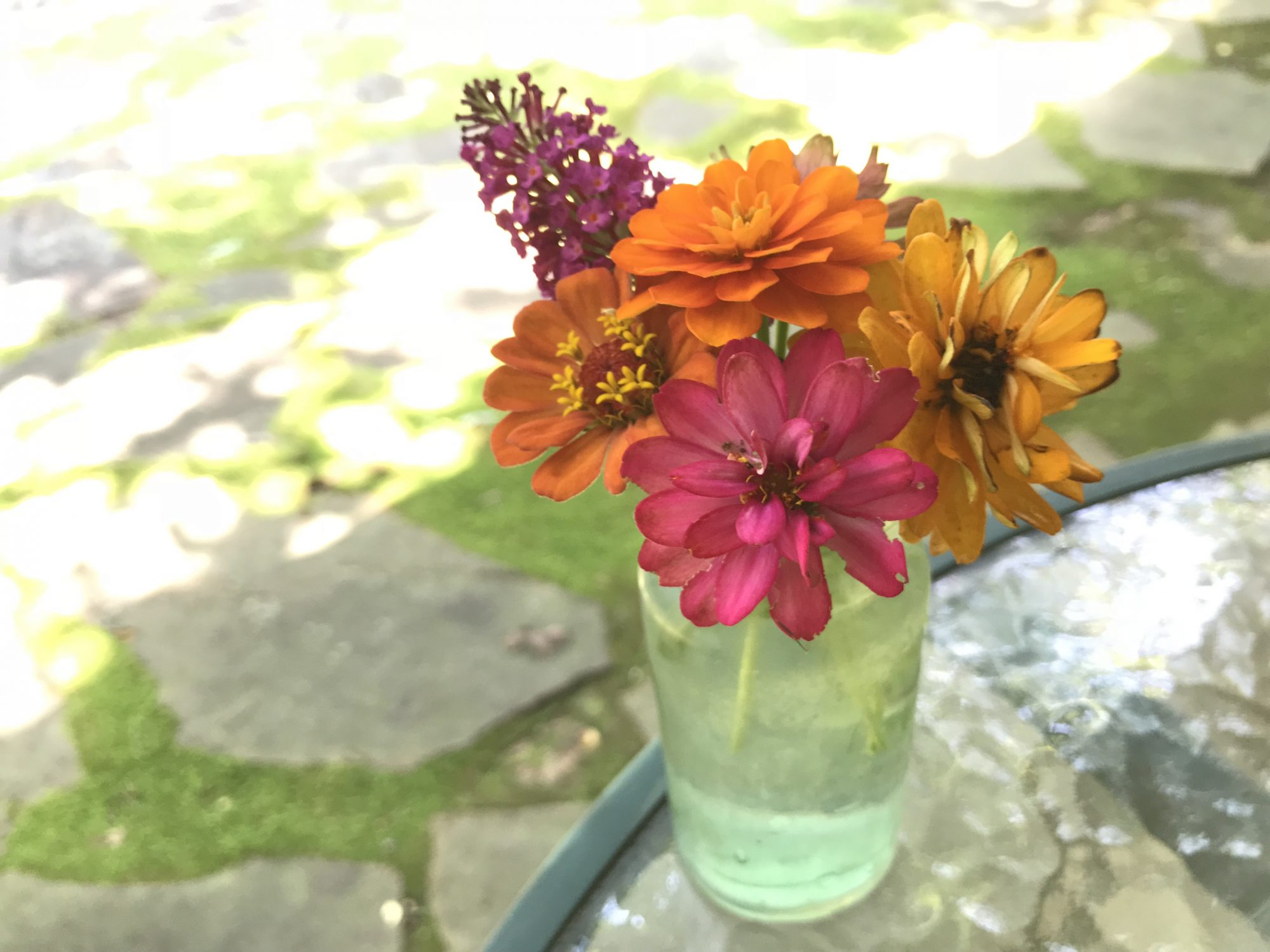 In a Vase on Monday: Zinnias and Buddleja