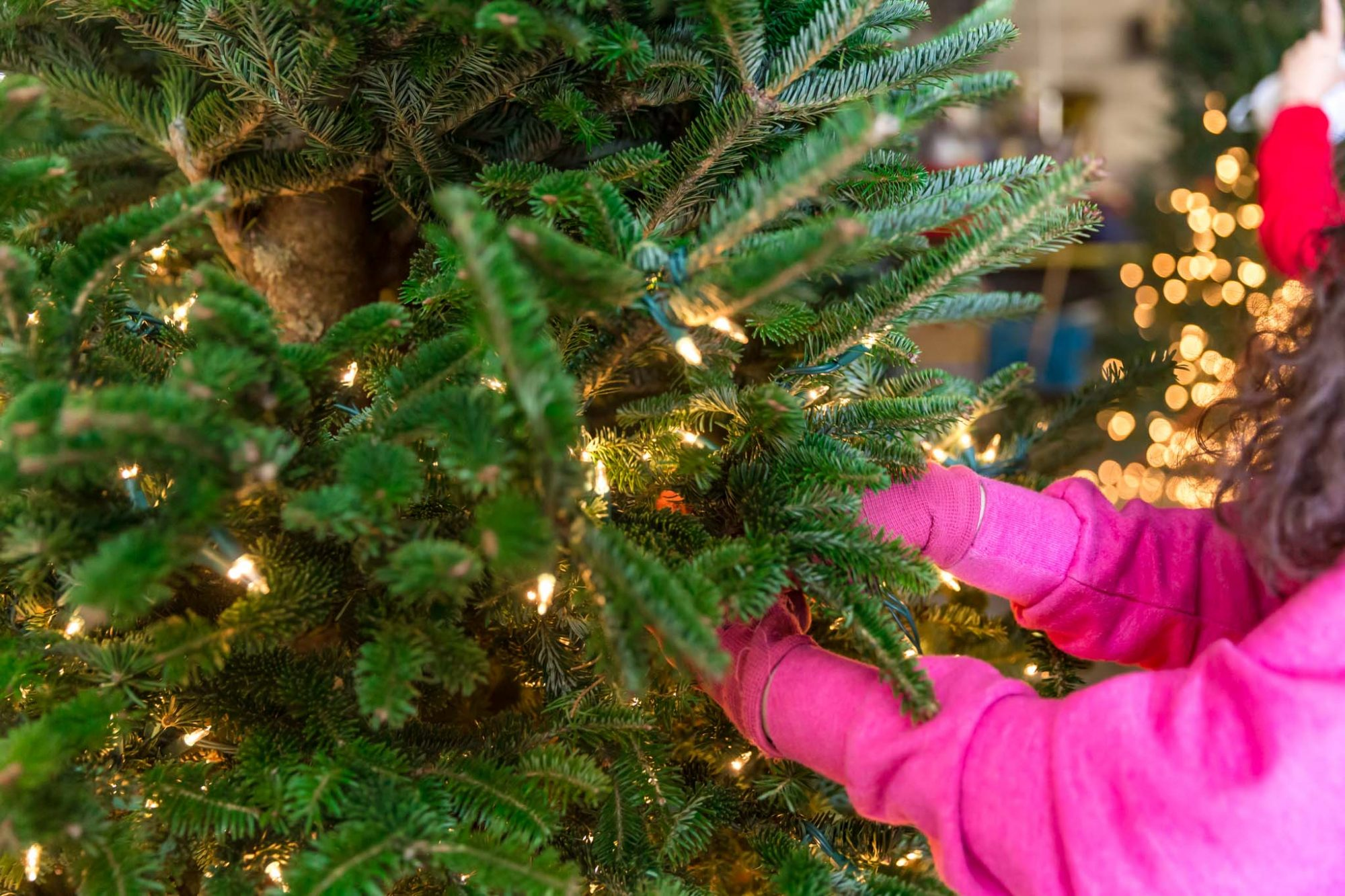 Southern family has grown Christmas trees for 50 years