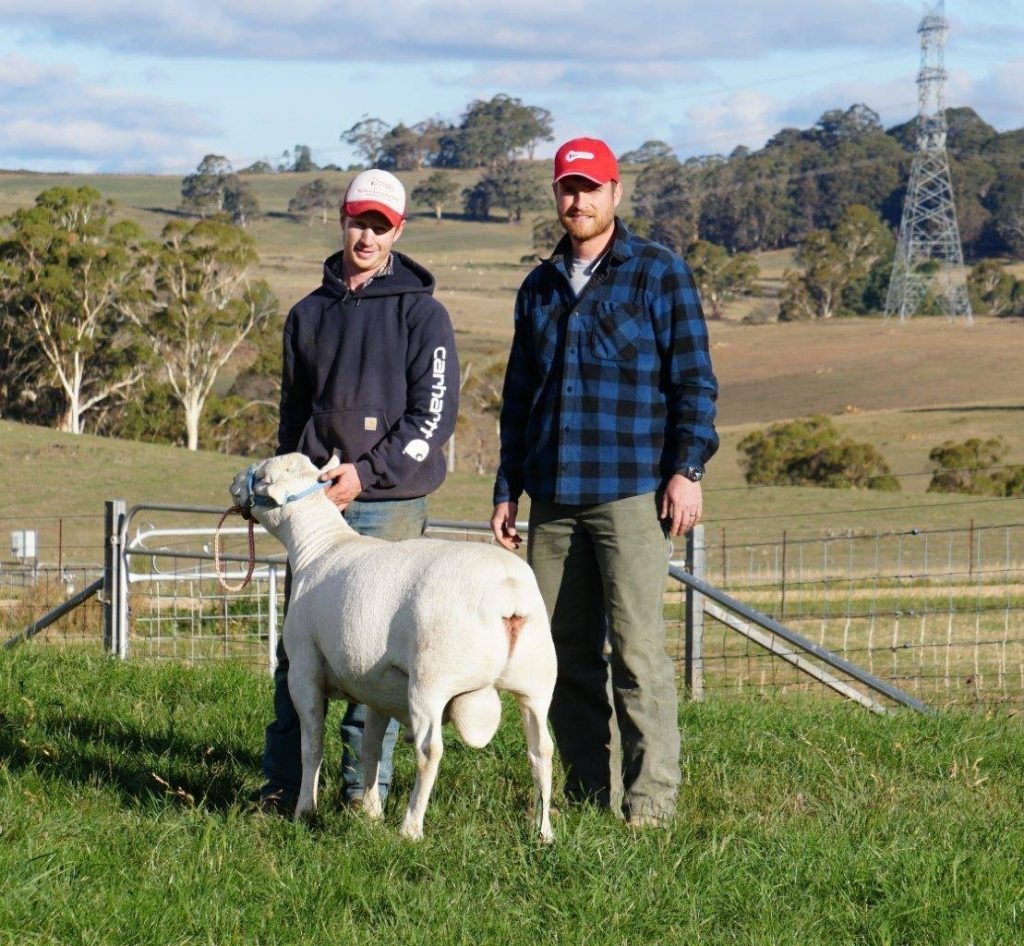 Inspired Southerner Australian White Sheep